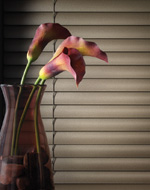Boise Natural Elements Horizontal Blinds Window Covering